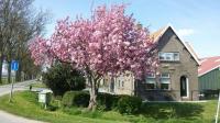 foto Oppas advertentie Caroline in Dordrecht