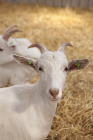 foto Begeleid wonen advertentie zorgboerderij Pieterburen in Ulrum