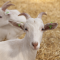 foto Zorgboerderij advertentie zorgboerderij Pieterburen in Sint Annen