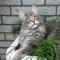 foto Palliatieve zorg advertentie Susan in Oud-Beijerland