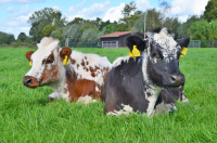 foto Zorgboerderij advertentie Zorgboerderij de Bijlmerweide in De Kwakel