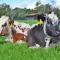 foto Zorgboerderij advertentie Zorgboerderij de Bijlmerweide in Den Ilp