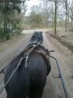 foto Zorgboerderij advertentie zonnepaard in Den Dungen