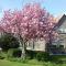 foto Naschoolse opvang advertentie Caroline in Dordrecht