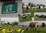 foto Zorgboerderij advertentie Paardenmelkerij / zorgboerderij