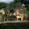foto Zorgboerderij advertentie De Roek Zorgbedrijf in Renswoude