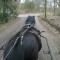 foto Zorgboerderij advertentie zonnepaard in Loosbroek