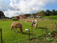 foto Dagbesteding advertentie Zorgboerderij De Leemberg in Woensdrecht